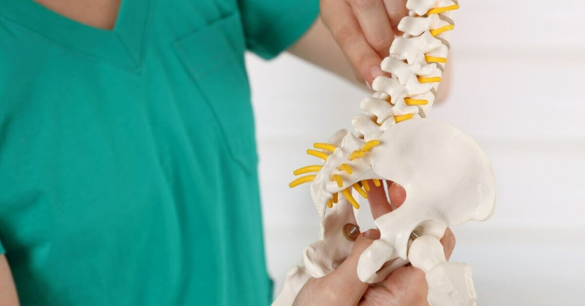 Kość ogonowa w osteopatii i fizjoterapii